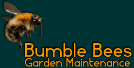 Bumble Bees Garden Maintenance